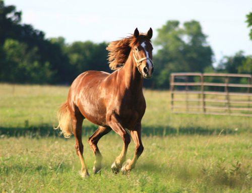 Principes d'apprentissagedu cheval