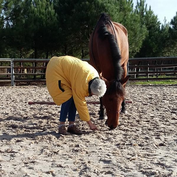 HORSE COACHING EQUICOACHING ALTER HORSE SÉANCE EQUICOACHING SÉMINAIRE