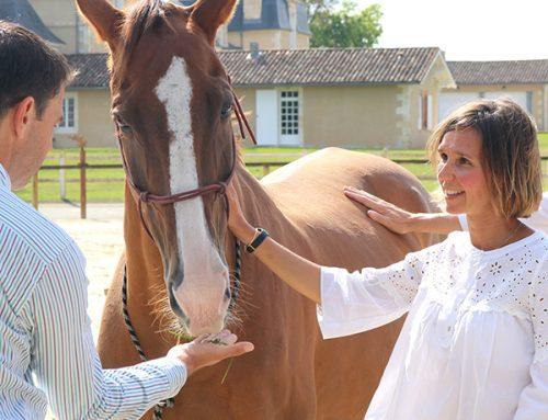 """Team Building avec les chevaux : """"Quelle expérience !"""""""