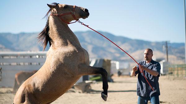 Alter Horse Equicoaching Horse Coaching the Mustang