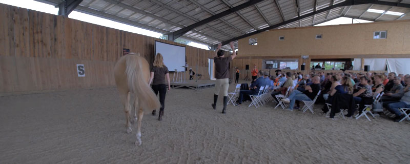 Alter Horse Equicoaching Horse Coaching Orange
