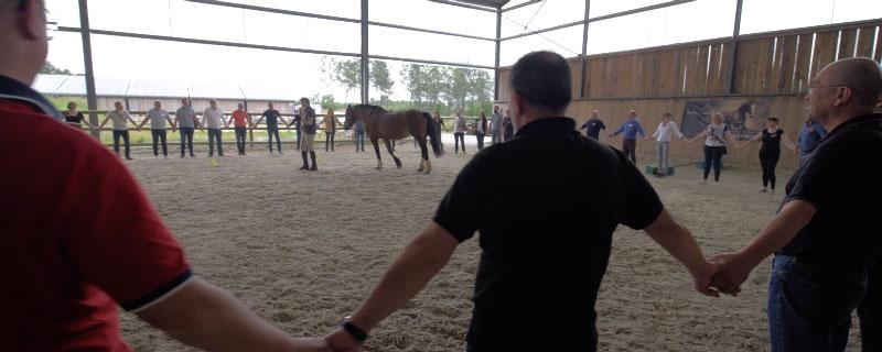 Alter Horse Equicoaching Horse Coaching Orange