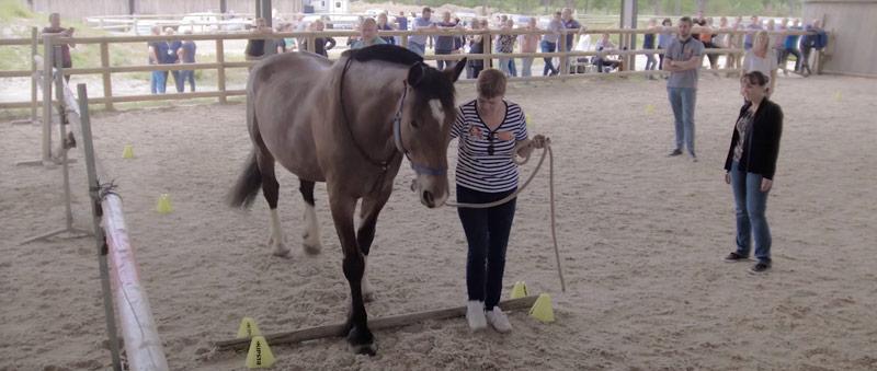 Alter Horse Coaching Equicoaching Séminaire Management et chevaux