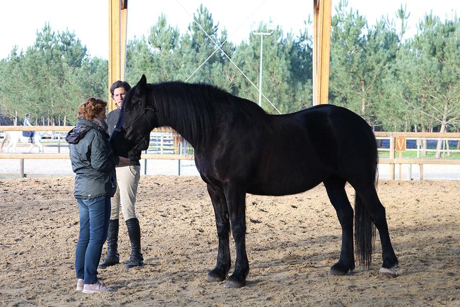 EQUICOACHING HORSE COACHING SÉMINAIRE