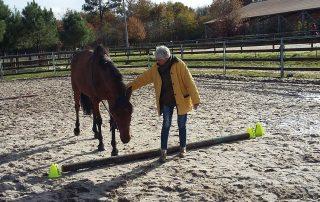 alter horse formation equicoaching aide au retour à l'emploi
