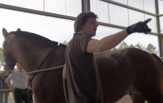 alter horse formation equicoaching amélioration-des pratiques manageriales
