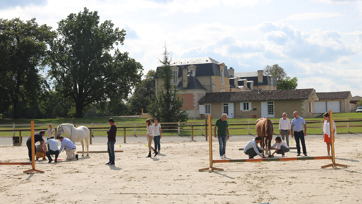 alter horse formation equicoaching cohesion equipe team building