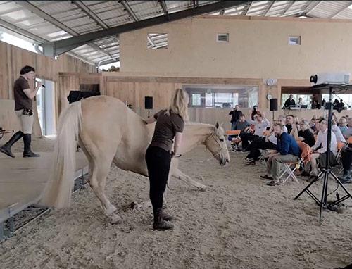 Equicoaching Alter Horse Coaching Séminaire