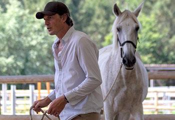 Renaud Subra Alter Horse